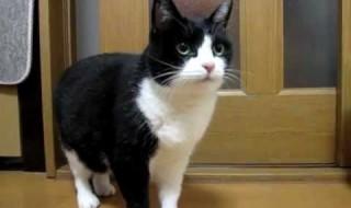 猫なのに、礼儀正しい!?ごちそうさまを言う猫