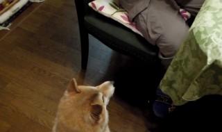 マジックで消えた犬のおやつは一体何処に?柴犬困惑