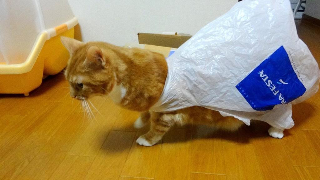 袋が外れない!猫の好奇心が大惨事に