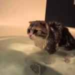 お湯が足りないよ!一緒にお風呂に入るニャン