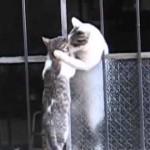 ギュッと抱きしめる母猫に思わず感動
