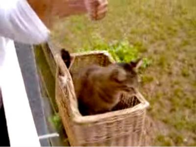 外にいる猫を家の中に入れたのは猫専用エレベーター