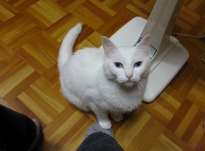 踏まれると踏み返す猫との繰り返しが笑えます