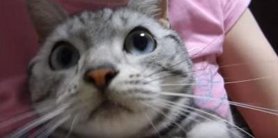 猫がワン!と泣いた理由は?