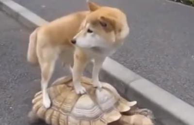 亀の背中に乗って犬も一緒にお散歩