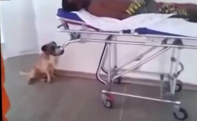 感動!全力で救急車を追いかける犬。中には飼い主が・・・