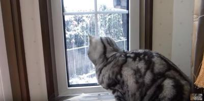 窓から見えた落雪にビックリした表情が可愛すぎる猫