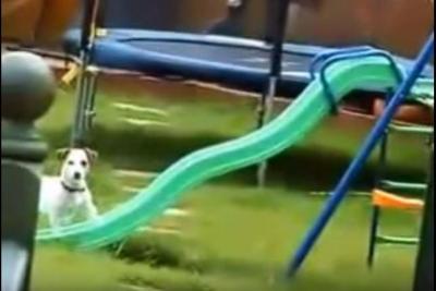 思わず笑ってしまう滑り台に登れない犬
