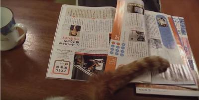 ページをめくったのは、猫のしっぽ?