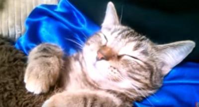 どうしてその格好!?こたつで丸くならずに寝る猫