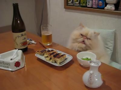 晩酌する姿が貫禄あり過ぎる猫