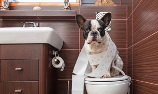 【しつけ:トイレ編】これでバッチリ!犬のトイレトレーニングのポイント