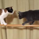 cat2_R
