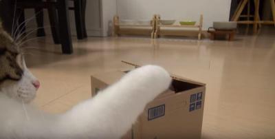 猫が貯金箱の開け方を習得!ボタンをポチッ