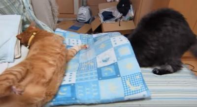 ひどい・・・。座布団から落とされてしまう猫