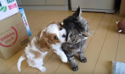 小犬に懐かれる、心優しい野良猫