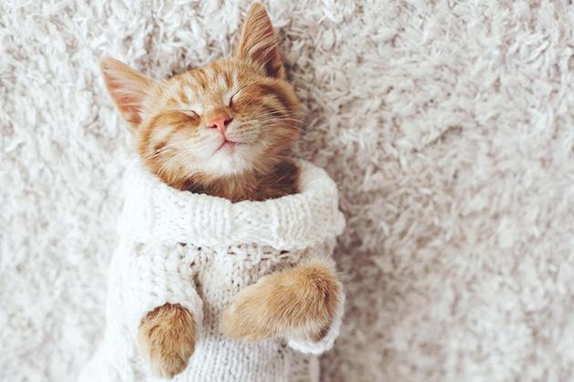 猫と上手く付き合うために! 知っておきたい猫の6つの習性