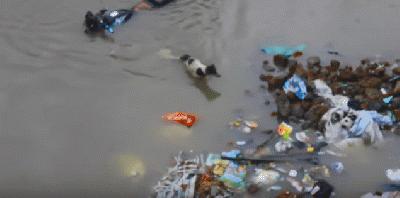 【感動】どうしても助けたい!泳ぐ犬の先に?