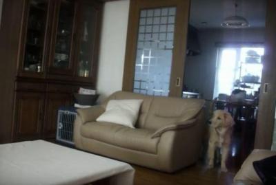 テレビの中のライオンに後ずさりする犬
