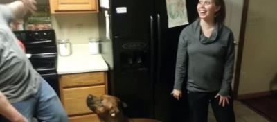 触るな!妊婦さんのお腹を守る犬