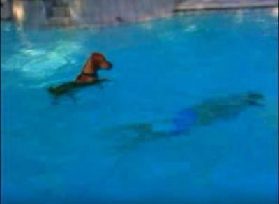 飼い主さんが溺れた!?必死に助けようとする犬