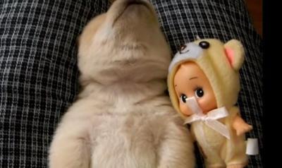 ずっと見ていても飽きない!子犬の寝言