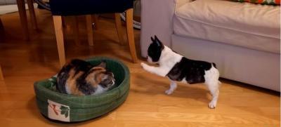 そのベッド返して!猫から取り返そうとする犬