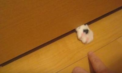フカフカでかわいい!ちょこちょこ動く猫の手