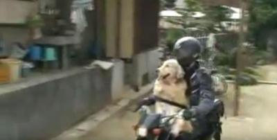 毛をなびかせバイクに乗るワイルドな犬