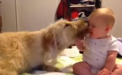 赤ちゃんとスキンシップを取る大型犬