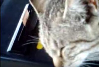 改札機の上で寝る猫。ほのぼのとした風景