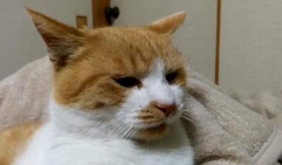 なぜか突然落ち込みはじめた猫