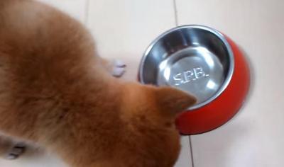 食欲が止まらない!食べ盛りな子犬