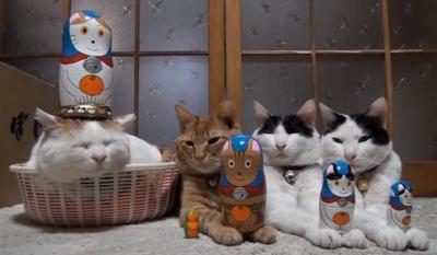 何をされても気にしない猫たち