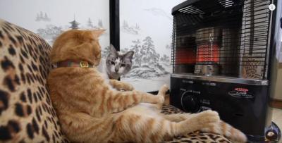ストーブの前は猫の特等席だニャン