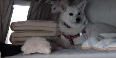 初めての洗車機に車内を逃げ惑う犬と猫