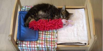 人形を抱きしめて寝る猫に激萌!