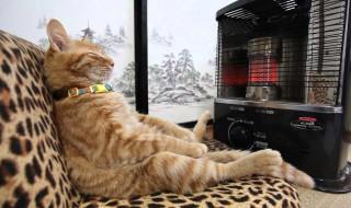 特等席だニャン!ストーブ前を占領する猫