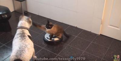 ルンバは戦闘機?ルンバに乗ったまま猫パンチ!