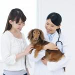 【マナー講座】動物病院での飼い主さんのマナーとは?