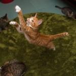 「ジャンプ姿」は猫の魅力!跳躍力の秘密と撮影のコツ