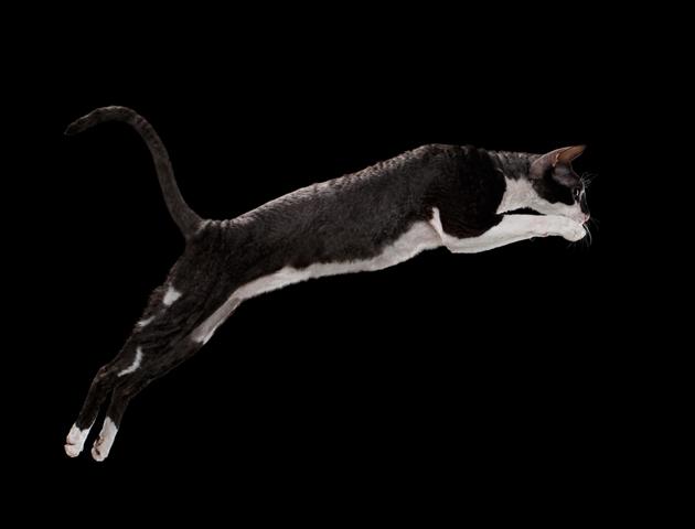 猫のジャンプを上手に撮影するには?