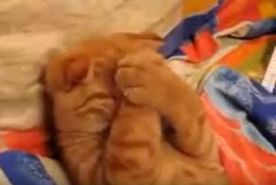 猫の寝ている姿が可愛さ炸裂!