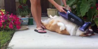 掃除機で犬の毛のお手入れも楽々