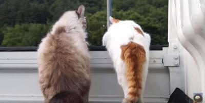 しっぽでお掃除?可愛い猫2匹のしっぽフリフリ