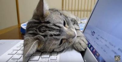 猫はパソコン作業の邪魔をするのがお仕事です