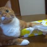 tissueneko_R