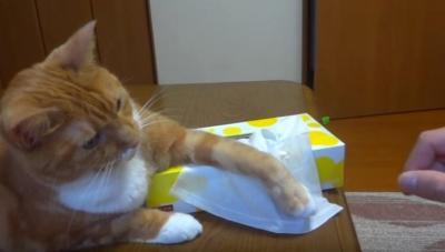 ティッシュを使わせまいと頑張る猫