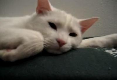 クシャミに反応する猫の口元が面白い