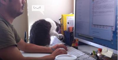 私より仕事が大事なの?いじける猫